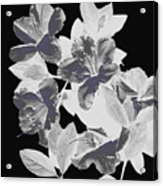 Azalea Branch Acrylic Print