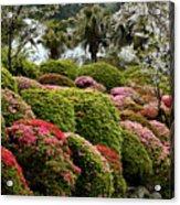 Azalea Bush Garden Acrylic Print
