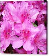Azalea Floral Garden Fine Art Photography Baslee Troutman Acrylic Print