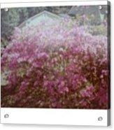 Azalea Framed By Roof Acrylic Print