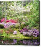 Azalea Heaven Acrylic Print by Eggers Photography