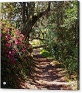 Azalea Path  Acrylic Print