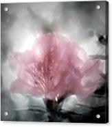 Azalea Soul Acrylic Print