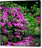 Azalea Waterfall At The Azalea Festival Acrylic Print