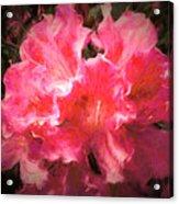 Azaleas 10 Acrylic Print