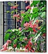 Azaleas At The Window   Acrylic Print