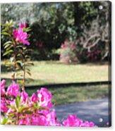 Azaleas In The Close 10 Acrylic Print