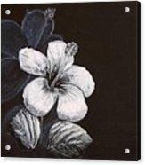 B And W Hibiscus Acrylic Print