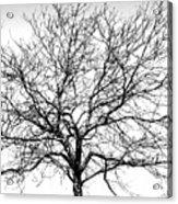 B/w Tree #1 Acrylic Print