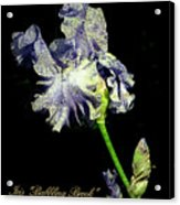 Babbling Brook Iris  Acrylic Print