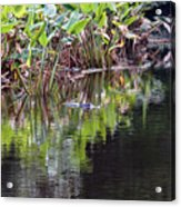 Babcock Wilderness Ranch - Alligator Den Acrylic Print