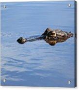 Babcock Wilderness Ranch - Alligator Lake - Waiting For Prey Acrylic Print