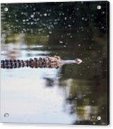Babcock Wilderness Ranch - Alligator Long Profile Acrylic Print
