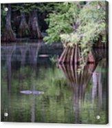 Babcock Wilderness Ranch - Peaceful Alligator Lake Acrylic Print
