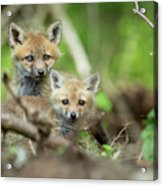 Babes In The Woods Acrylic Print
