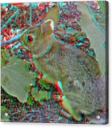 Baby Bunny - Use Red-cyan 3d Glasses Acrylic Print