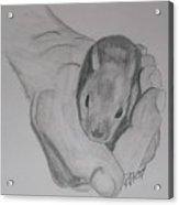 Baby Bunny Acrylic Print