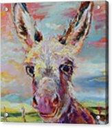 Baby Donkey Painting By Kim Guthrie Art Acrylic Print