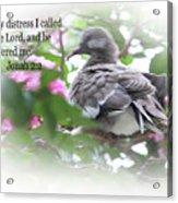 Baby Dove Jonah 2 V 2 Acrylic Print