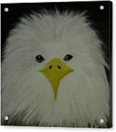 Baby Eagle Acrylic Print