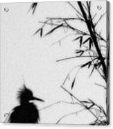 Baby Egret Waits Acrylic Print