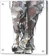 Baby Elephant Study Acrylic Print