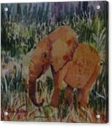 Baby Elly Acrylic Print