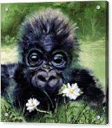 Baby Gorilla With Daisies Acrylic Print