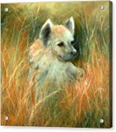 Baby Hyena Acrylic Print