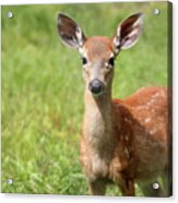 Baby In The Tall Grass Acrylic Print