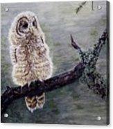 Baby Owl Acrylic Print