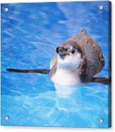Baby Penguin Floating Acrylic Print