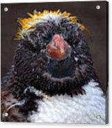 Baby Penguin Acrylic Print