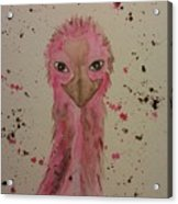 Baby Pink Acrylic Print by Ginny Youngblood