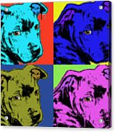 Baby Pit Face Acrylic Print by Dean Russo