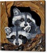 Baby Raccoons Acrylic Print