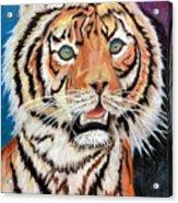 Baby Tiger Acrylic Print