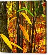 Baby Tree Foliage Acrylic Print