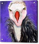 Baby Vulture Acrylic Print