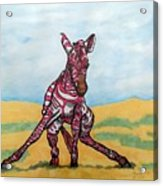 Baby Zebra Acrylic Print