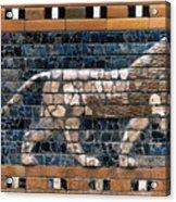 Babylon: Lion Acrylic Print