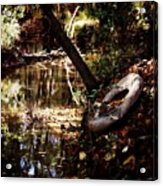 Back Road Finds Acrylic Print