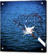 Back To The Bay Blue Crab Acrylic Print