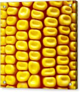 Background Corn Acrylic Print