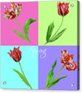 Background With Tulips Acrylic Print