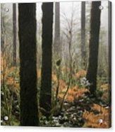 Backlit Bracken Ferns Acrylic Print