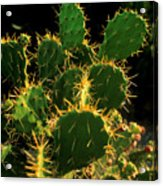 Backlit Cacti Acrylic Print