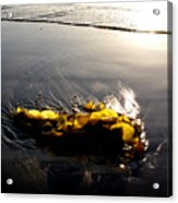 Backlit Kelp Acrylic Print