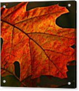 Backlit Leaf Acrylic Print