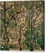 Backlit Moss-covered Trees Caddo Lake Texas Acrylic Print